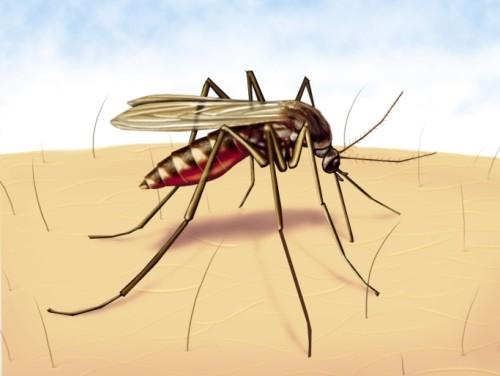 informacion sobre el dengue 2
