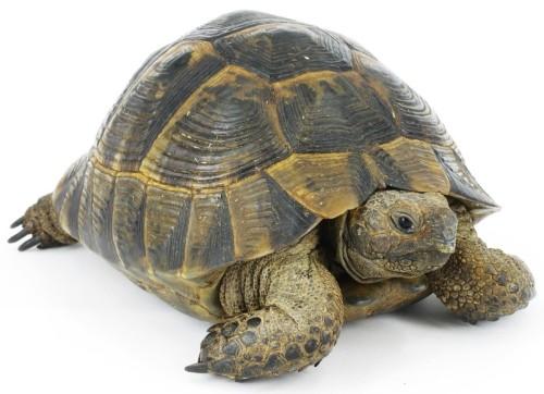 informacion sobre la tortuga 1