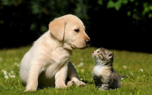 Información sobre los animales domesticos y salvajes 2