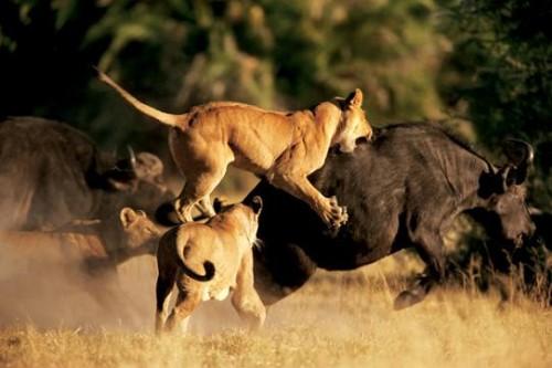 Información sobre los animales domesticos y salvajes 4