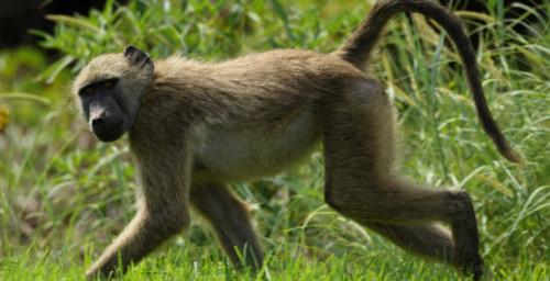 Información sobre los animales domesticos y salvajes 5