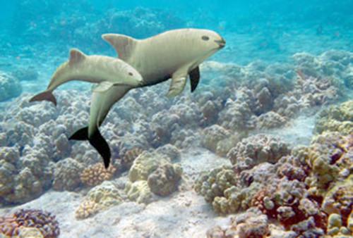 Información sobre la vaquita marina 1
