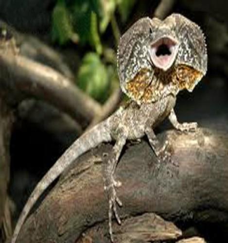 Información sobre el lagarto de&nbsp;&hellip;</div>         <div class=
