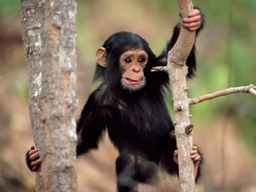 Información sobre el mono 5