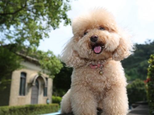 Las 10 razas de perros más inteligentes 2