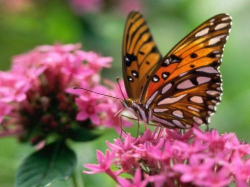 Las mariposas 2