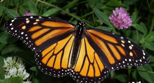 Las mariposas 3