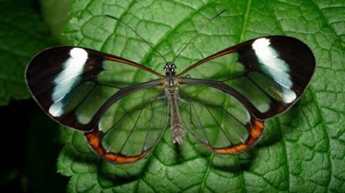 Las mariposas 4