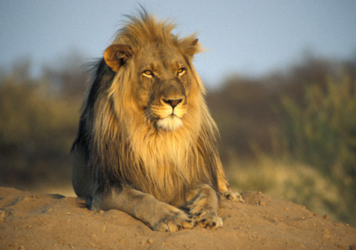 los 10 animales más peligrosos del planeta 5