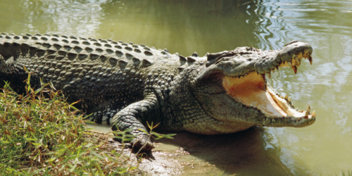 los 10 animales más peligrosos del planeta