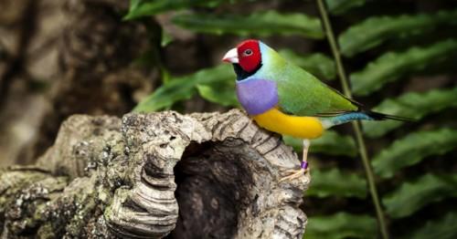 Imágenes de las aves más bellas del mundo 10