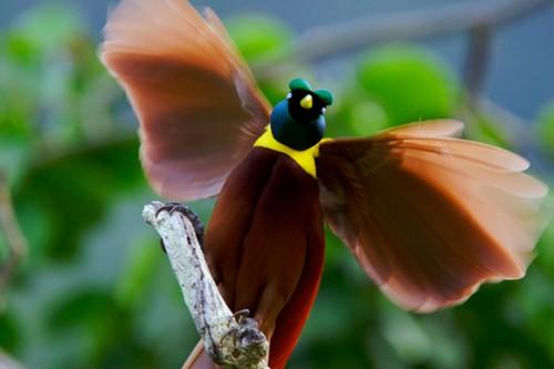 Imágenes de las aves más bellas del mundo 6