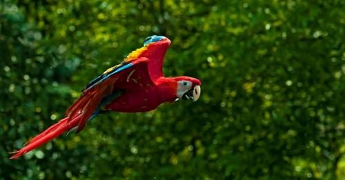 Imágenes de las aves más bellas del mundo 7