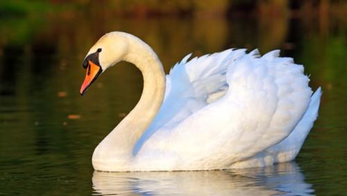 Imágenes de las aves más bellas del mundo 9